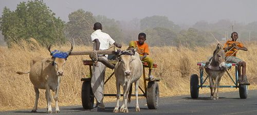 Ox-and-cart